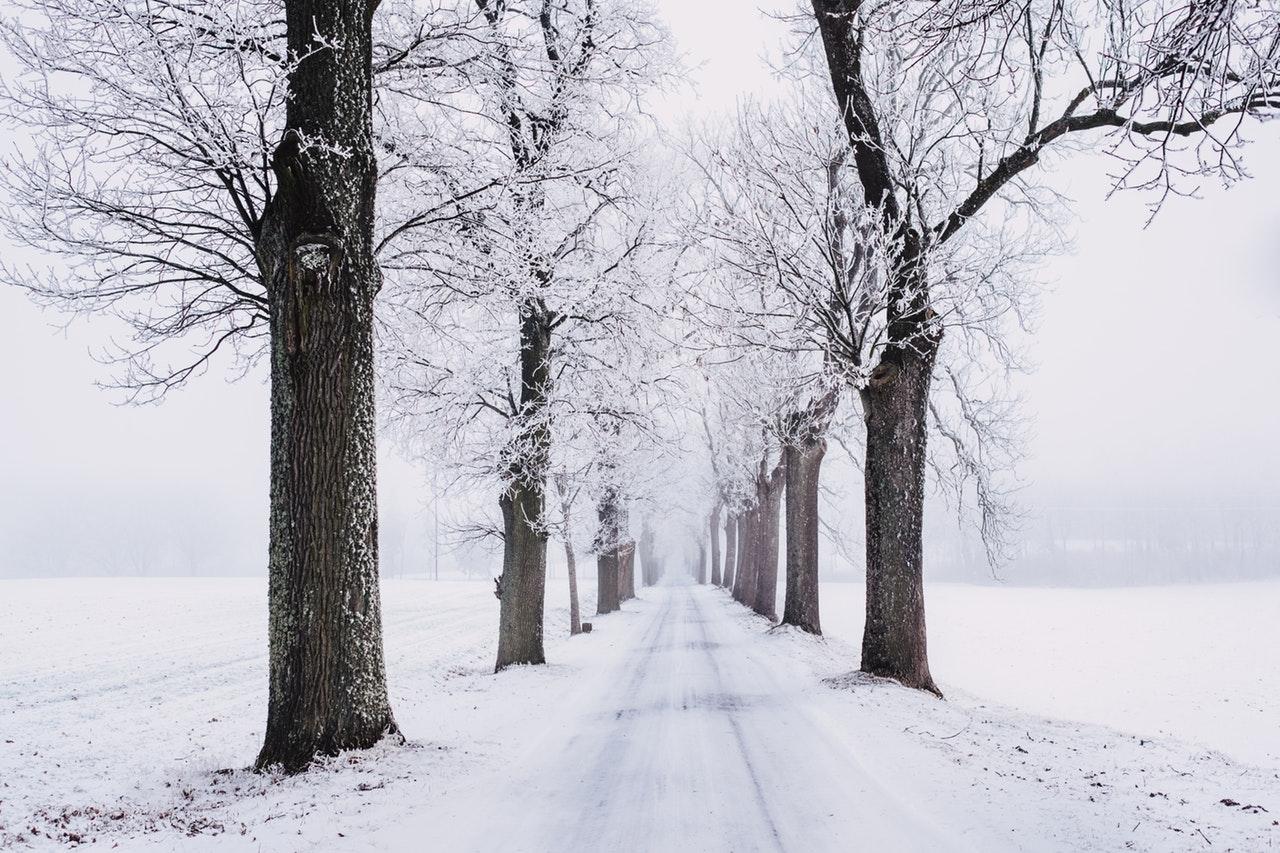 talvinen maisema, jossa tie puiden välissä